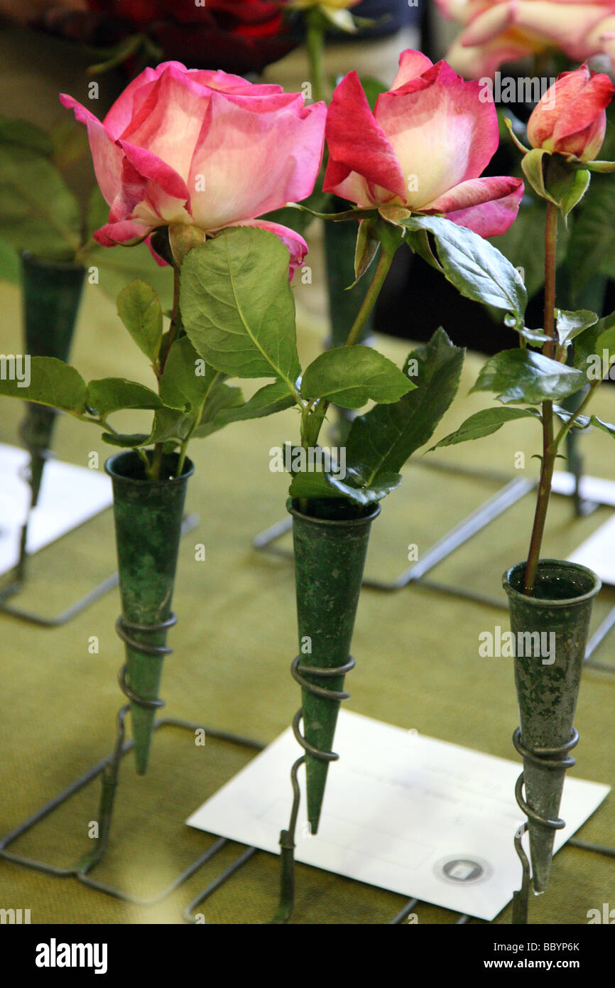 Three roses in a vase displayed at a horticultural show Stock Photo