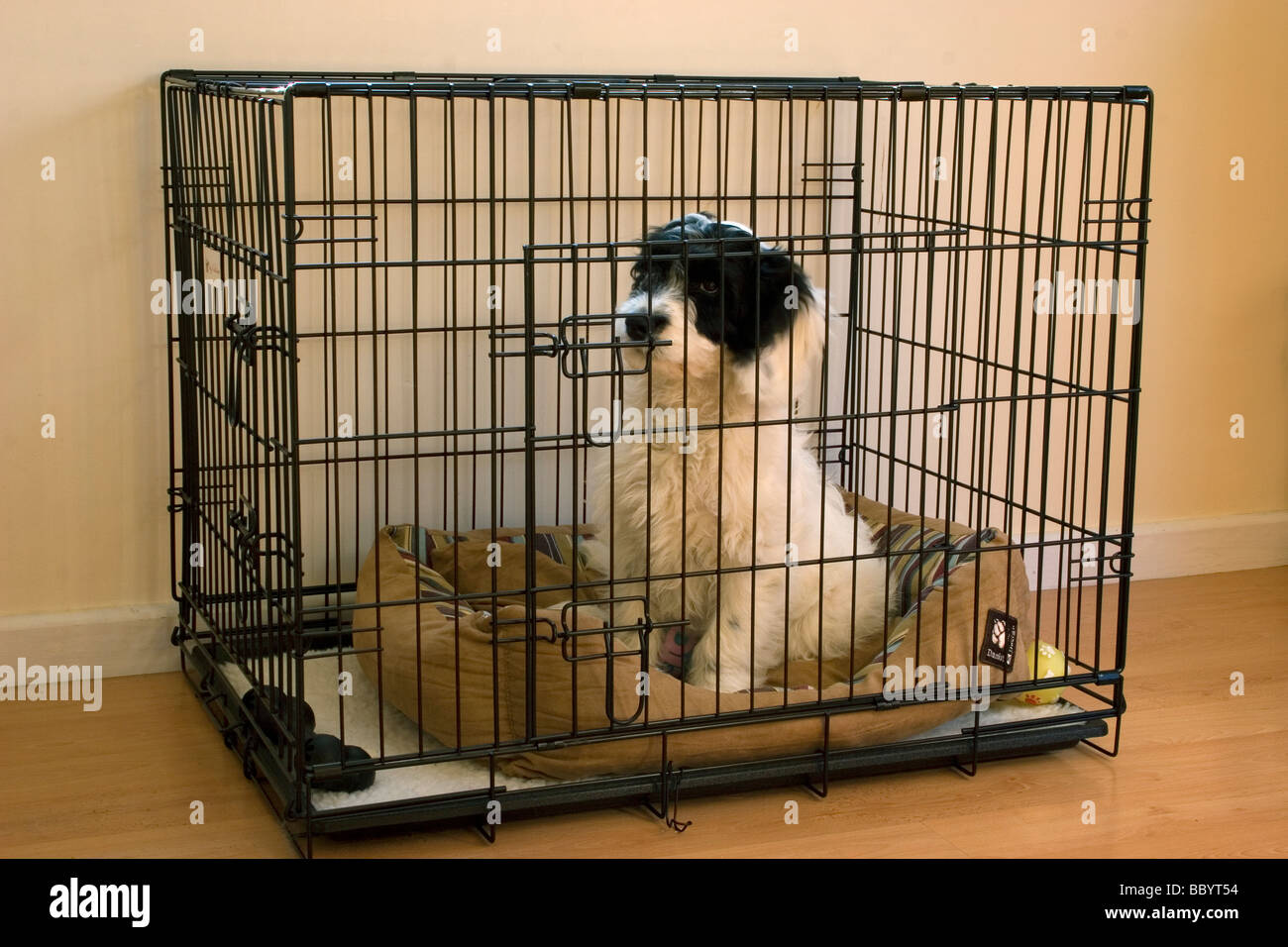 cockapoo puppy sitting in cage indoors Stock Photo