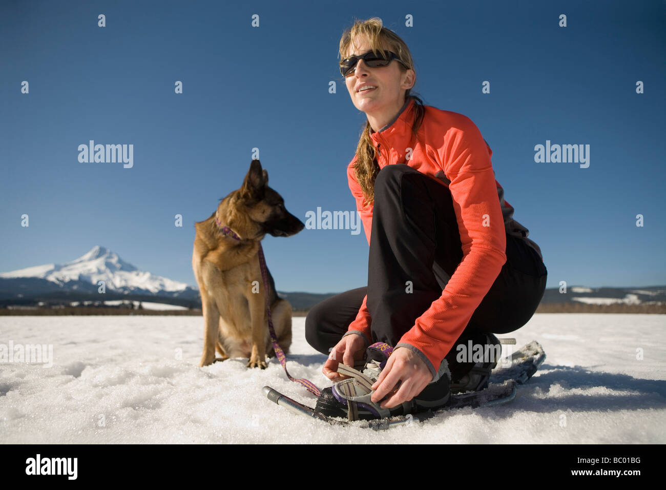 Young woman with dog puts on snowshoes near Mt. Hood, Oregon. - Stock Image