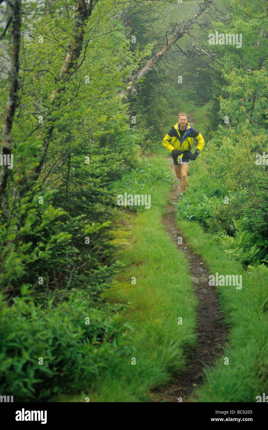 Male trail runner in a lush rainy forest. - Stock Image