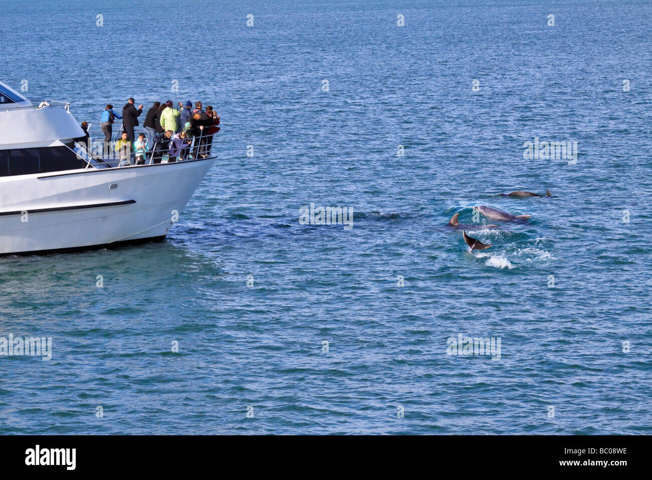 Dolphin watching, Bay of Islands, Northland, New Zealand. Tourists crowd the bow of a dolphin watching boat. - Stock Image