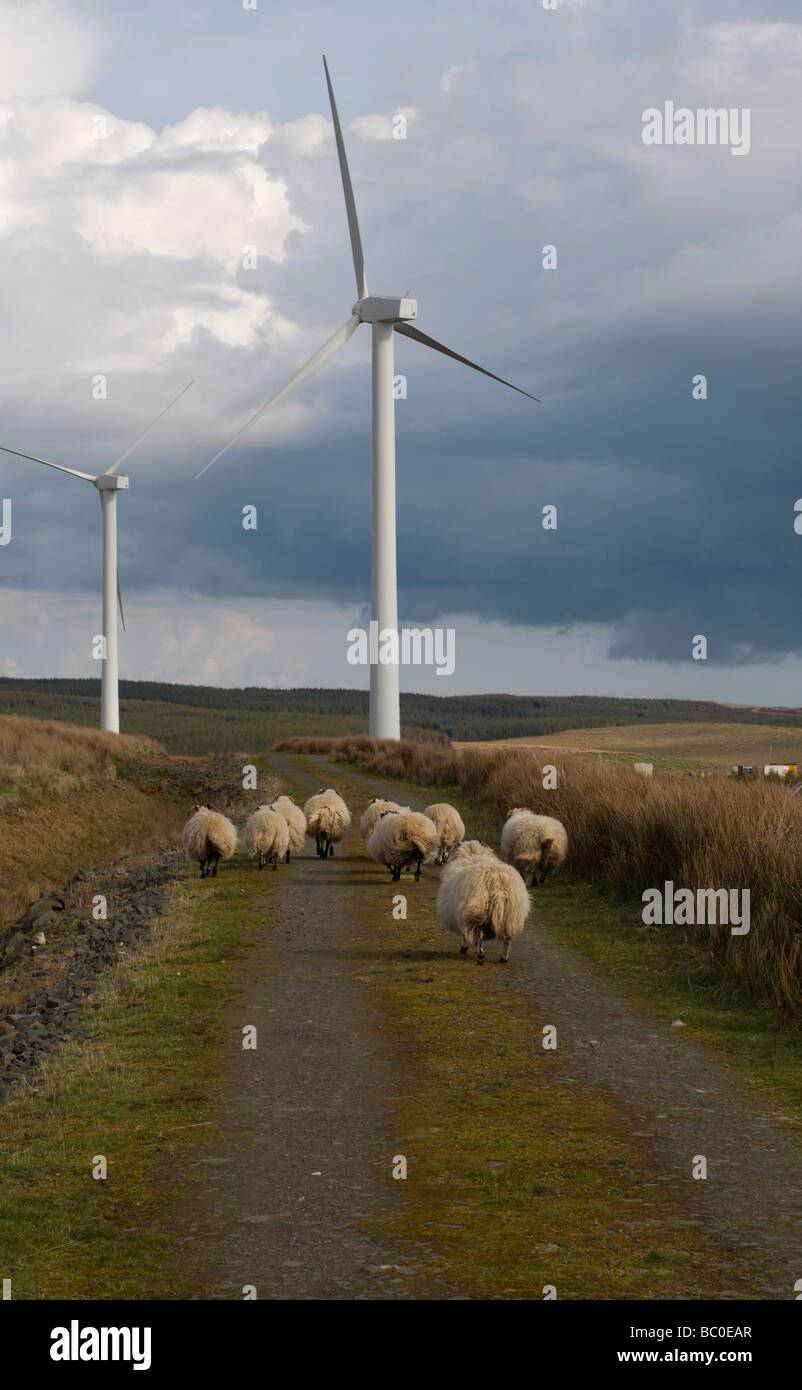 Wind Farm with sheep - Stock Image