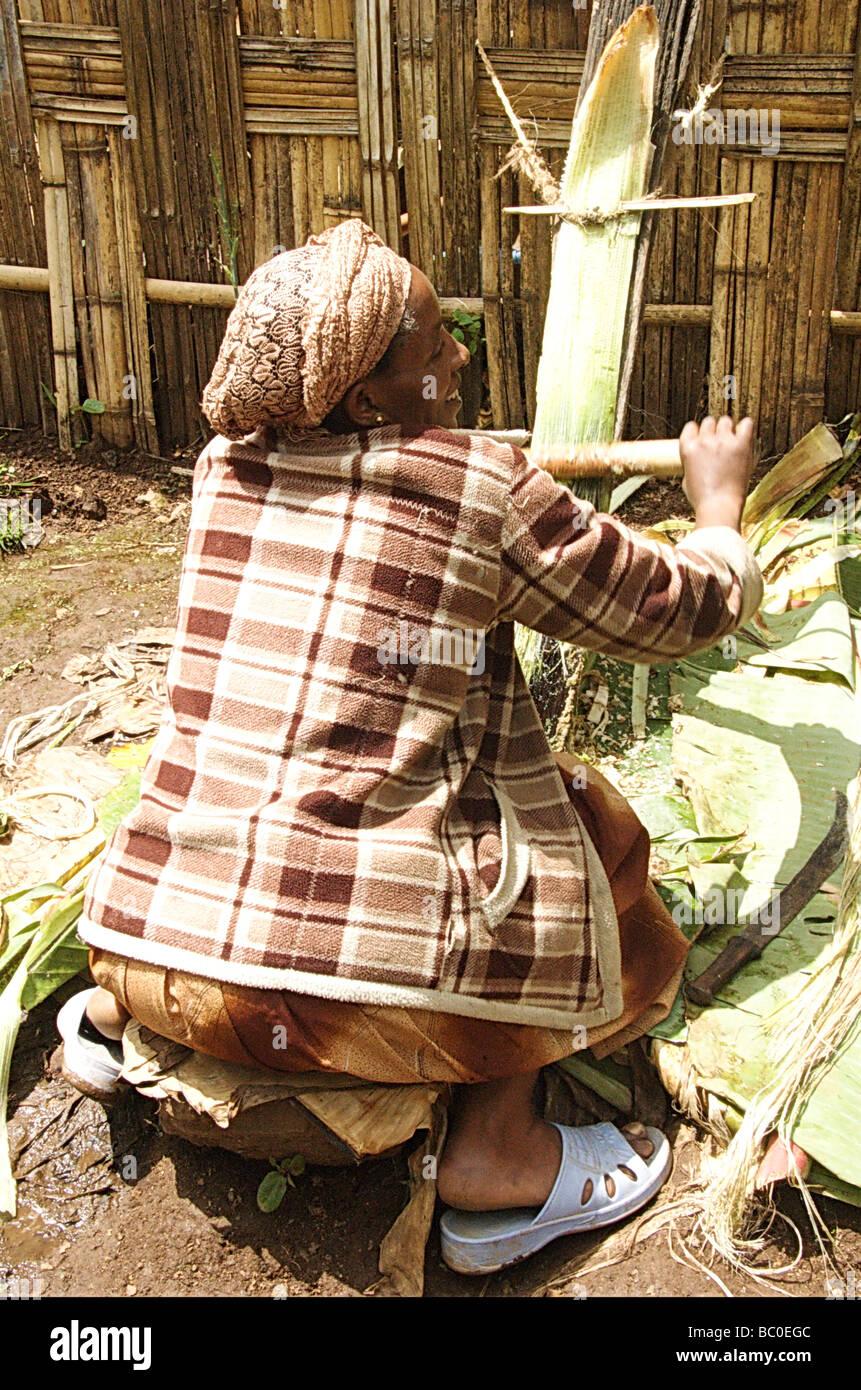 Africa Ethiopia Omo region Chencha Dorze village shaving a leaf of the fruitless Banana - Stock Image
