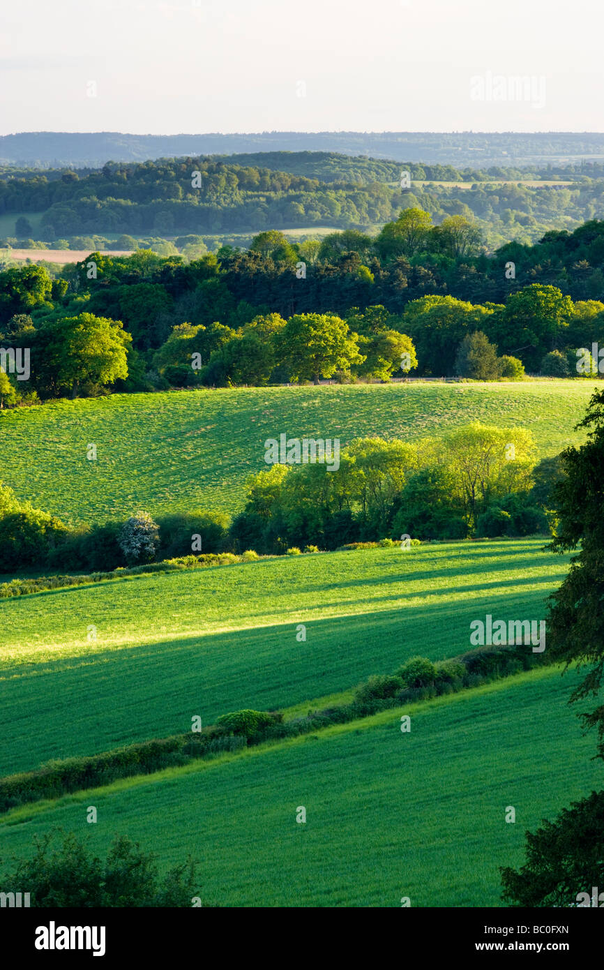 Mixed countryside at Newlands Corner, Surrey, UK - Stock Image