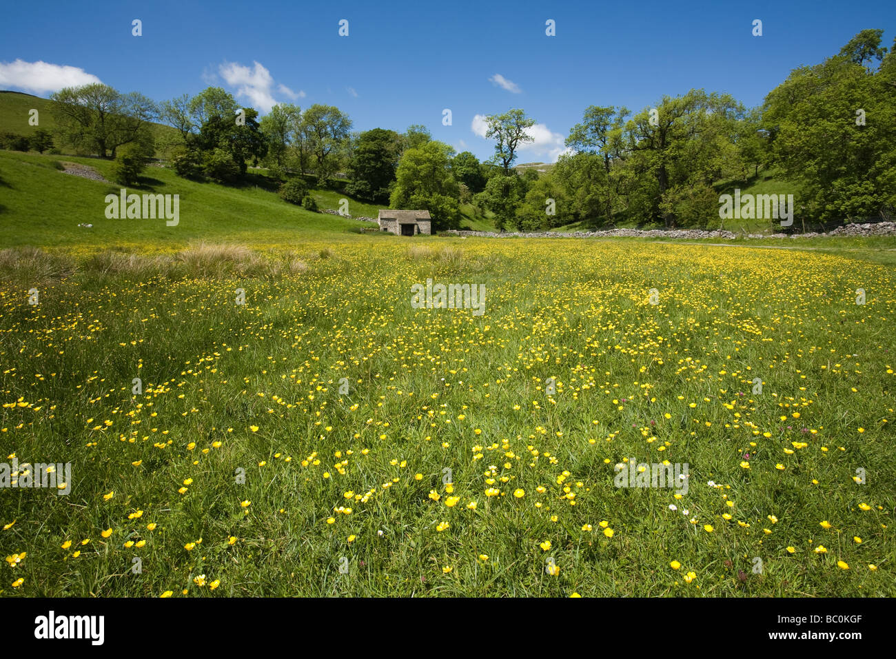 Wild Flowers and Fields near Malham Yorkshire Dales England - Stock Image