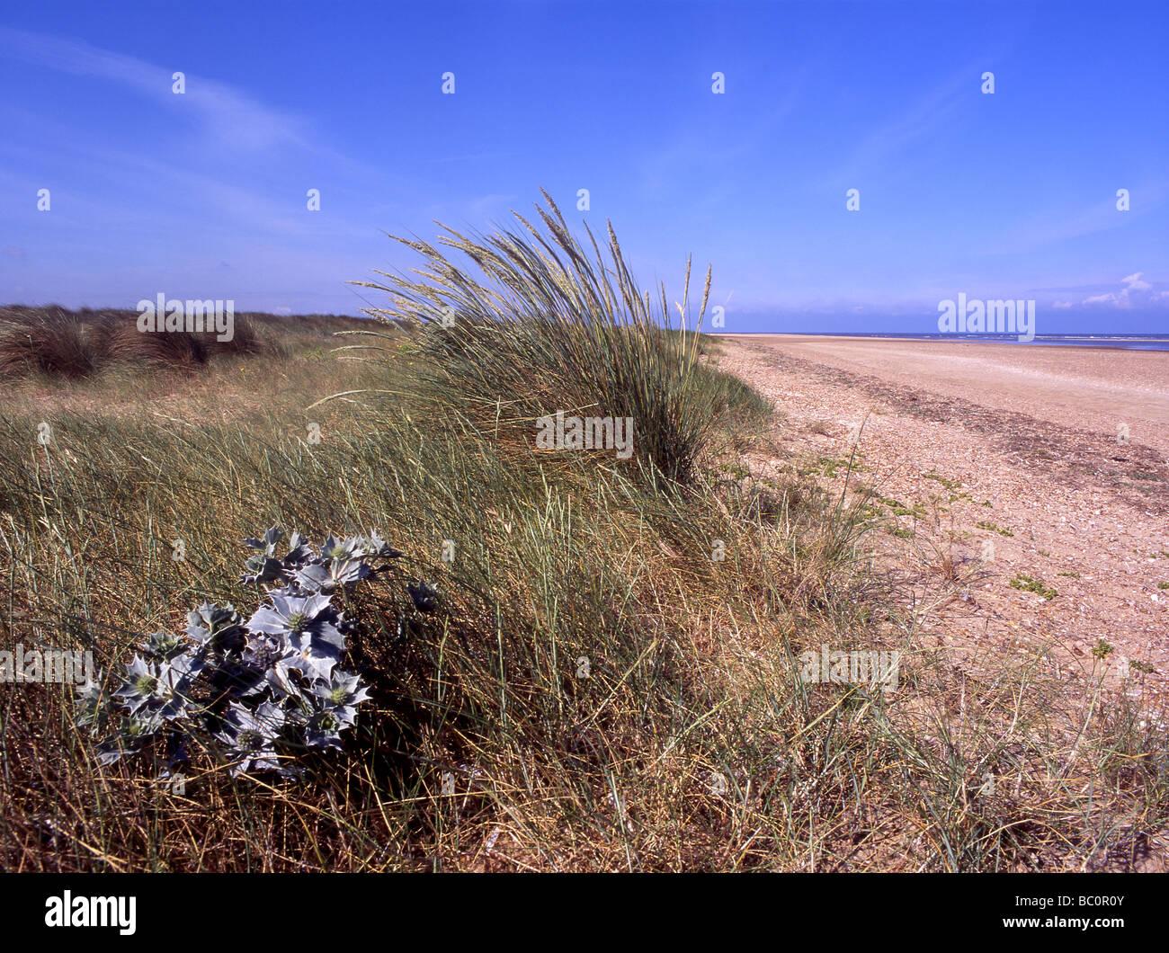 Holme beach, north-west Norfolk. - Stock Image