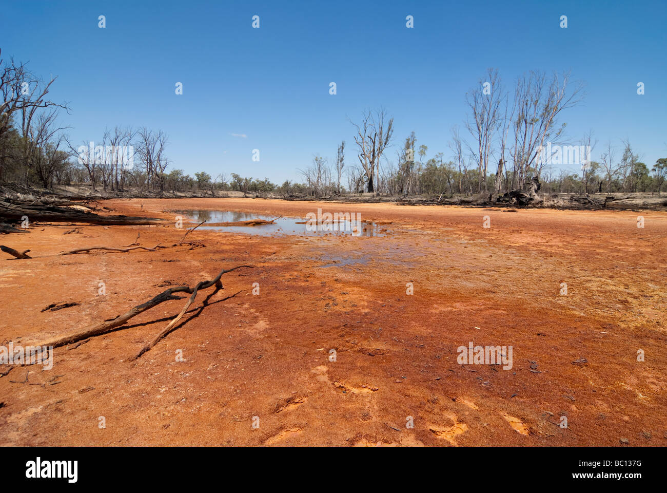 Wetland acidified by acid sulfate soils - Stock Image