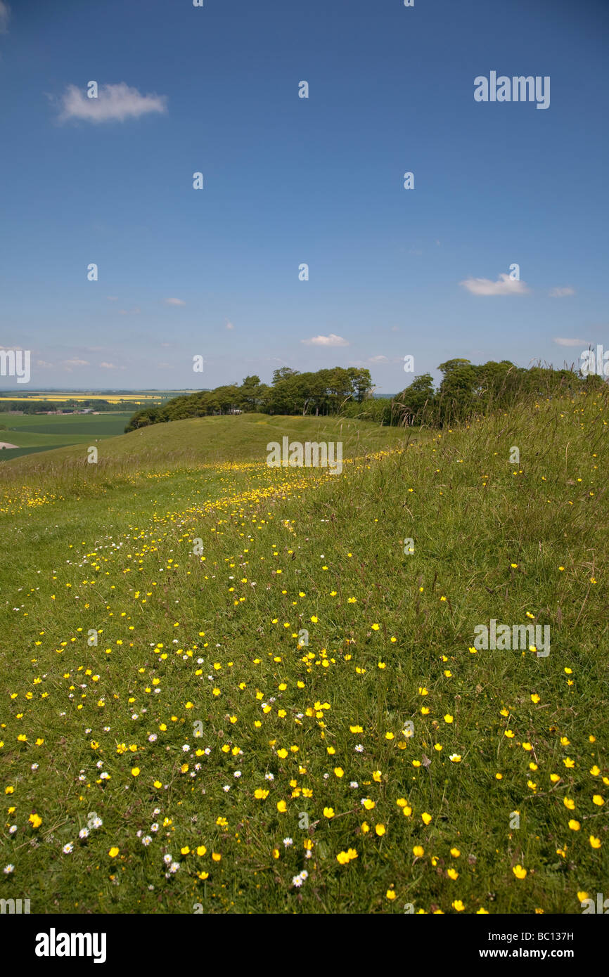 buttercups in a wildflower meadow on a sunny summer day in the wiltshire countryside Stock Photo