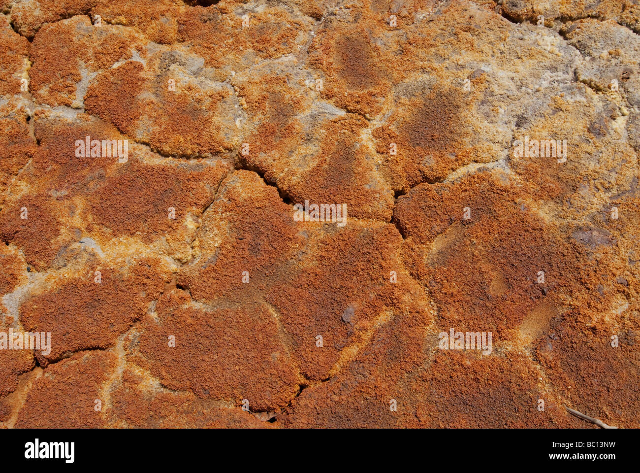 Detail of acid sulfate soil - Stock Image