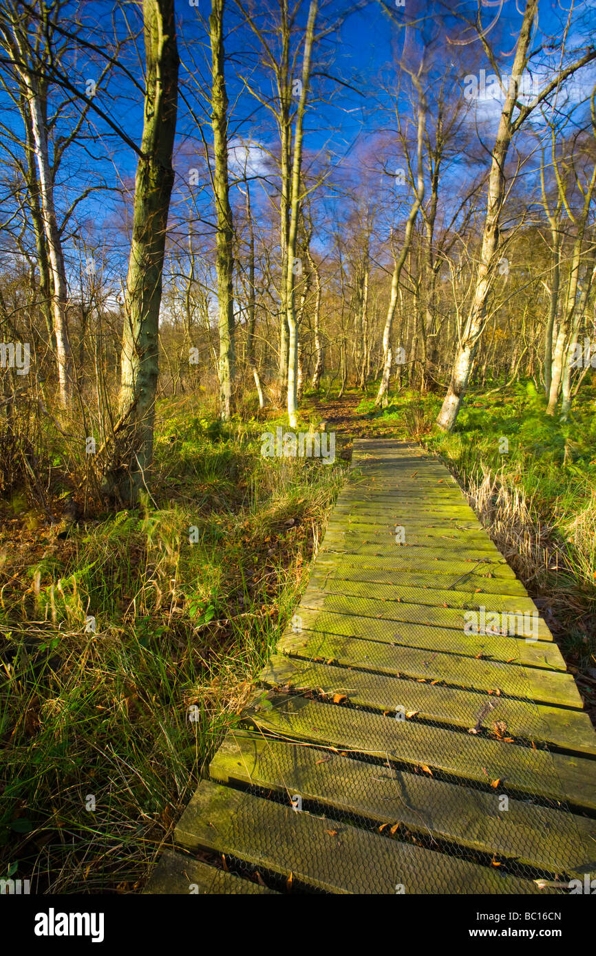 England, Tyne Wear. Woodland of Gosforth Park nature reserve managed by the Natural History Society of Northumbria - Stock Image