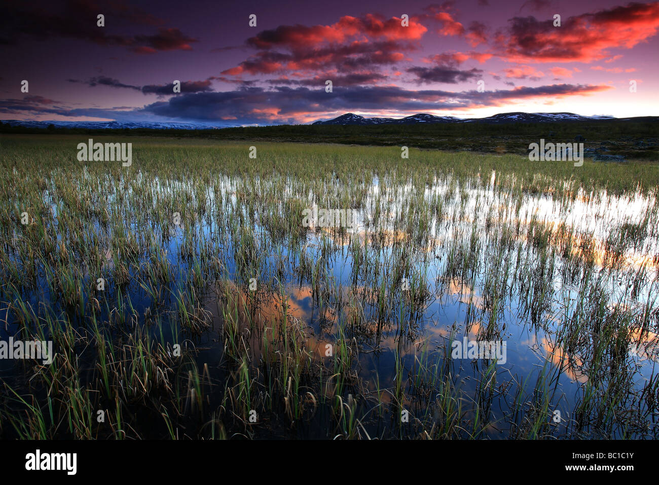 Evening colours at Fokstumyra nature reserve at Dovrefjell, Dovre kommune, Norway. - Stock Image