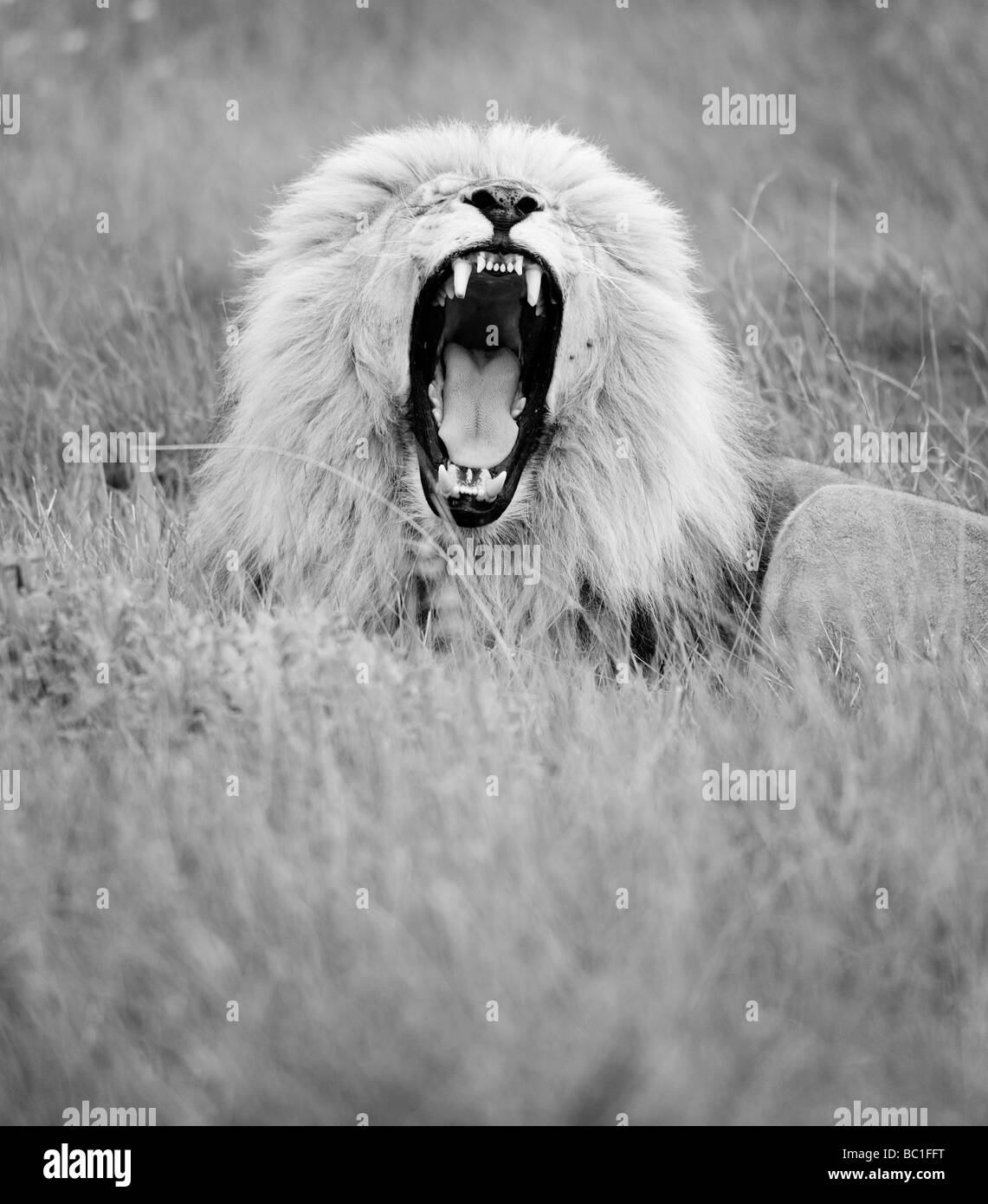 South Africa, Eastern Cape Province, Seaview Game and Lion Park. - Stock Image