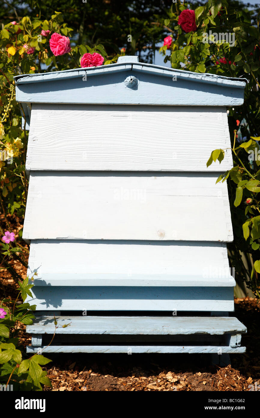 single blue painted beehive in an english garden - Stock Image