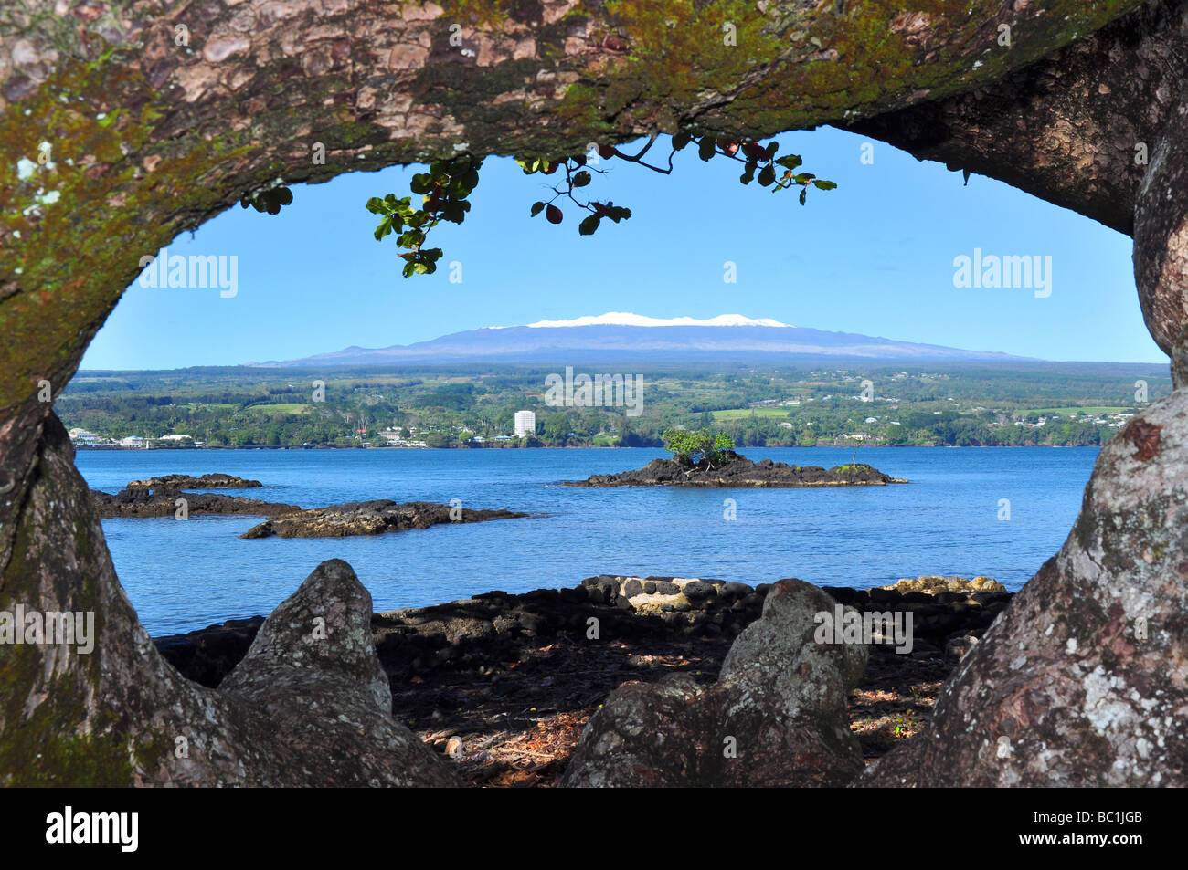 Looking through a large tree across Hilo Bay in Hawaii you can see the extinct snow covered volcano Mauna Kea. - Stock Image