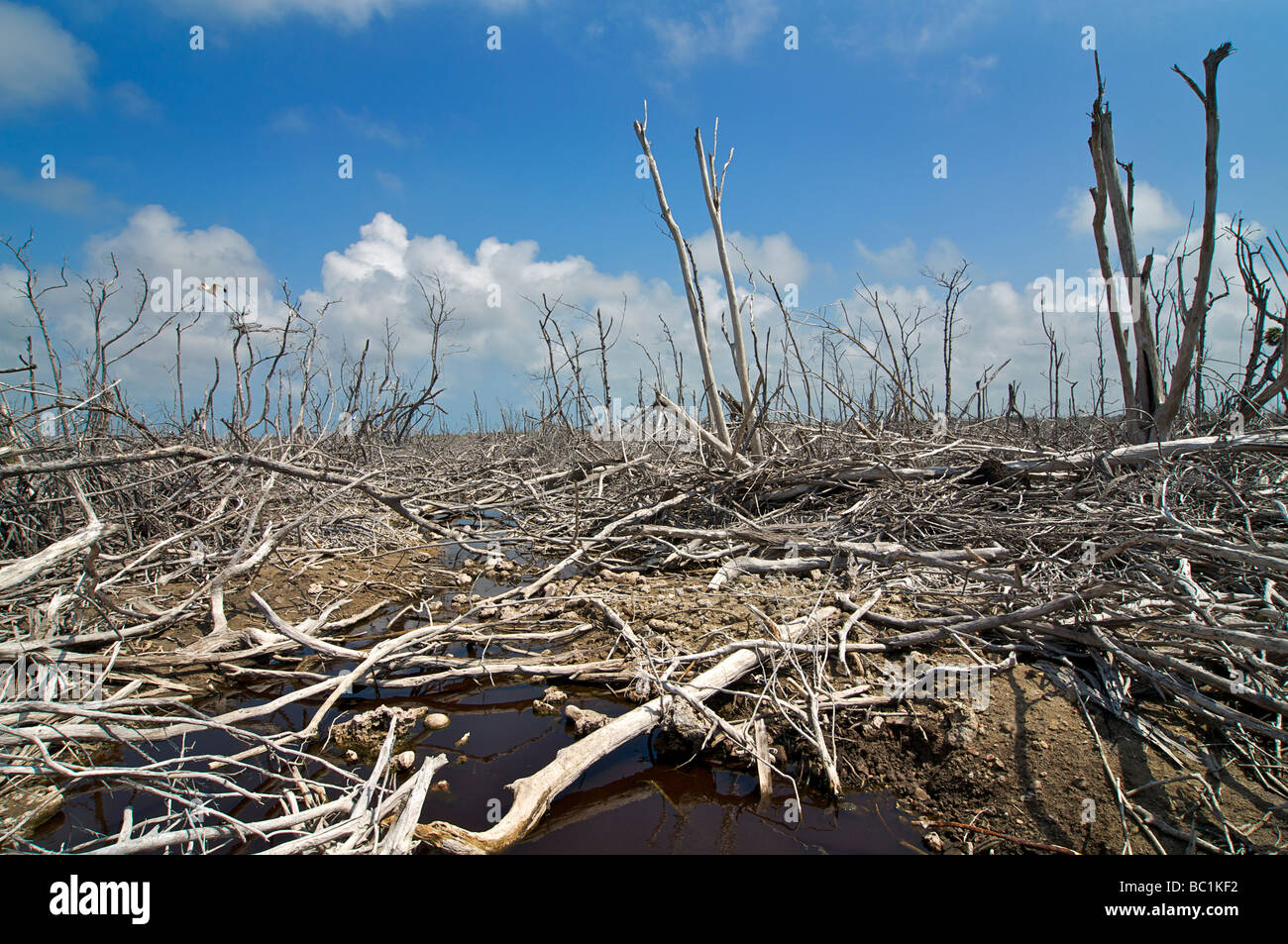 Environmental damage, likely caused by an elevated water table and increased salinity, now unable to support vegetation - Stock Image