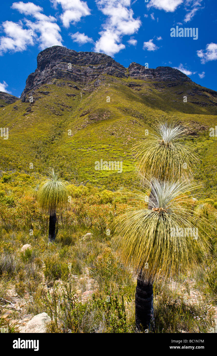Grass Trees infront of Bluff Knowl Stirling Range National Park Western Australia - Stock Image