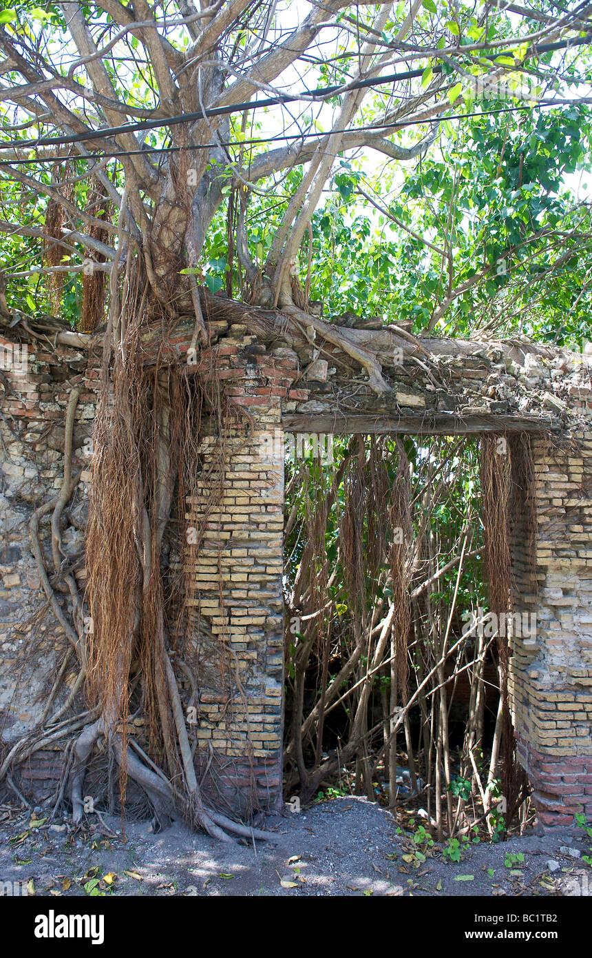 Sint Eustatius overgrown ruins of warehouses - Stock Image