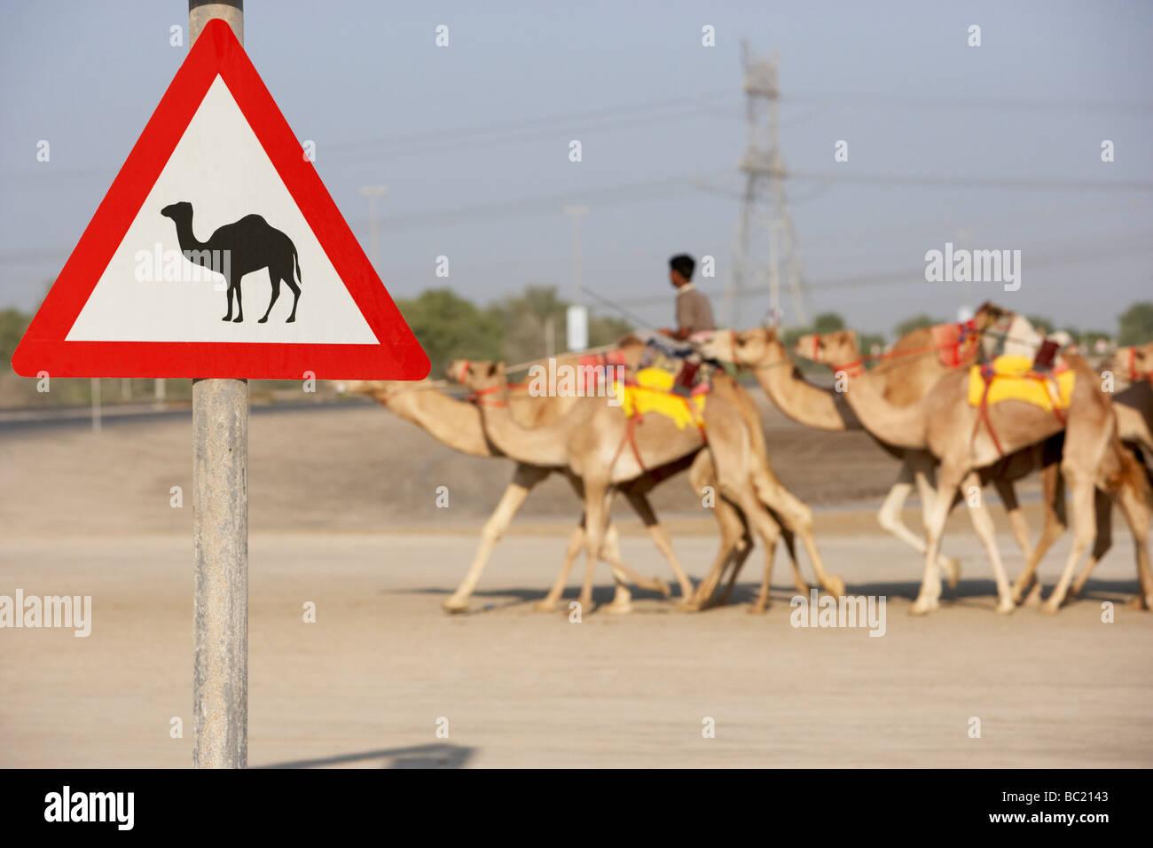 Beware Of Camel Sign In Dubai - Stock Image