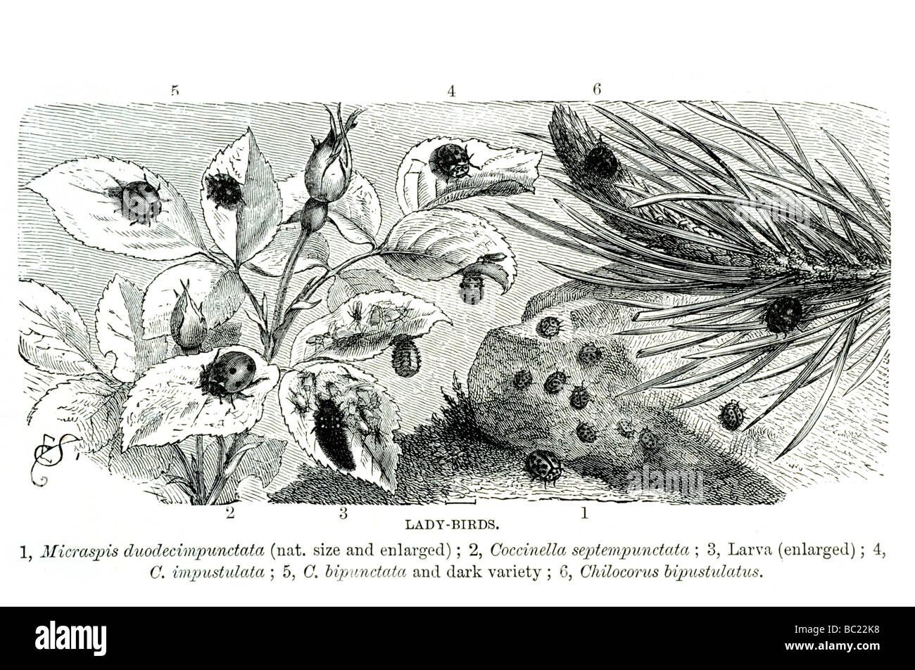 Lady Bird Book Stock Photos & Lady Bird Book Stock Images - Alamy