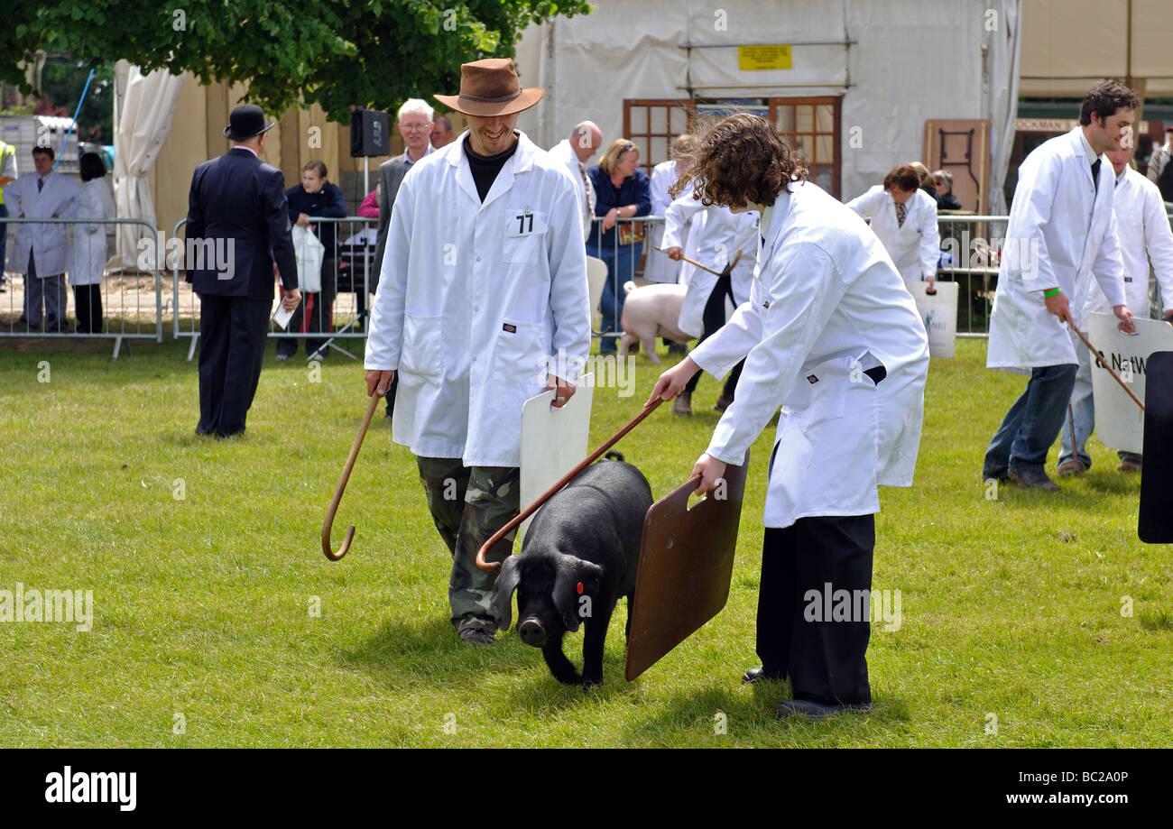 Pigs Uk Summer Stock Photos & Pigs Uk Summer Stock Images