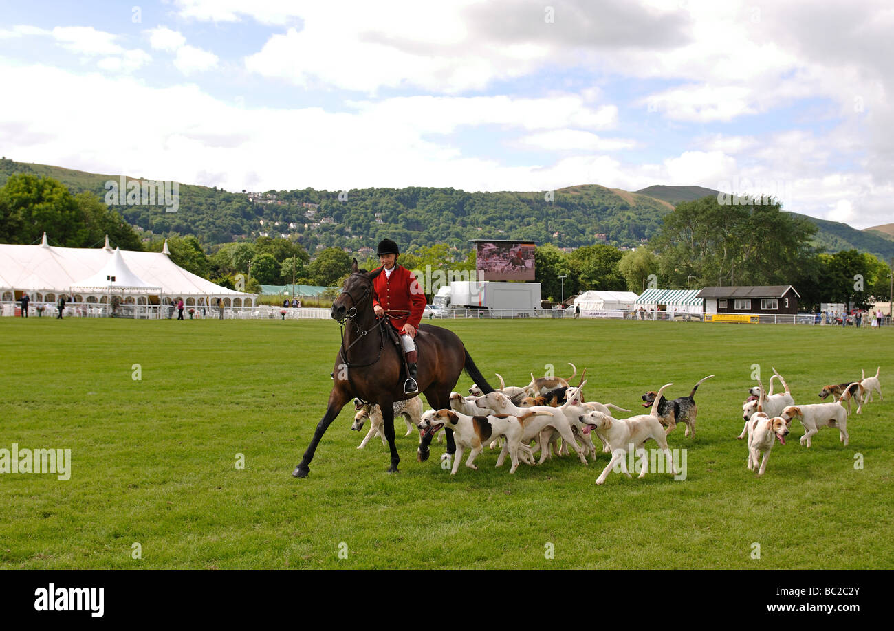 Huntsman and hounds at the Three Counties Show, Great Malvern, UK - Stock Image