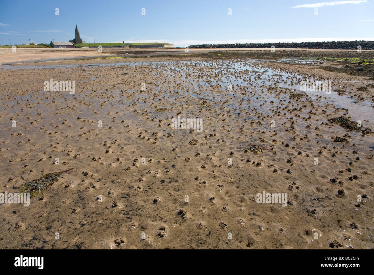 Worm Casts On The Beach At Newbiggin By The Sea Northumberland The