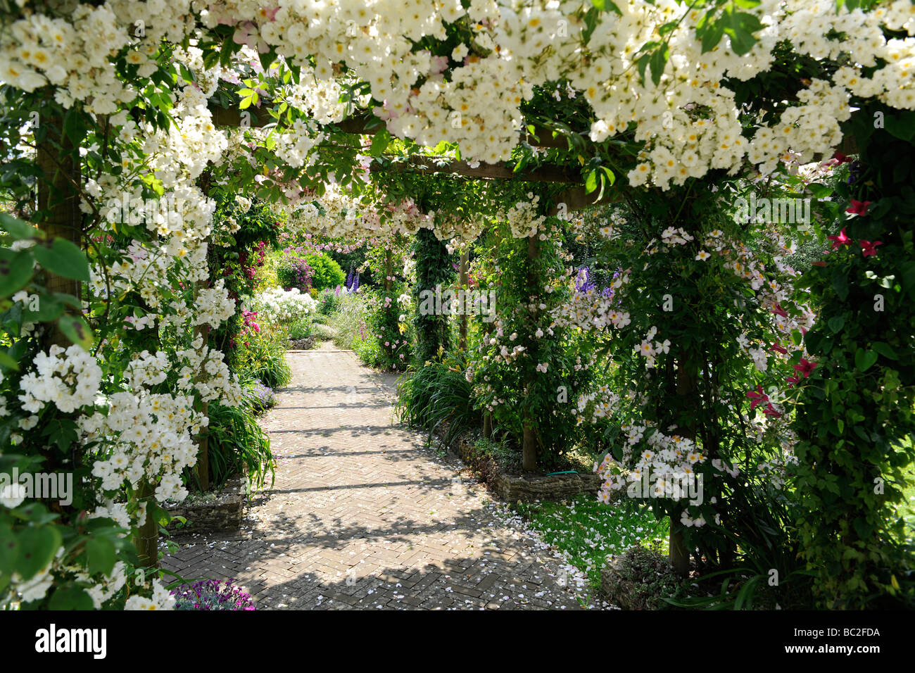 English Garden With Roses On A Pergola, In Somerset