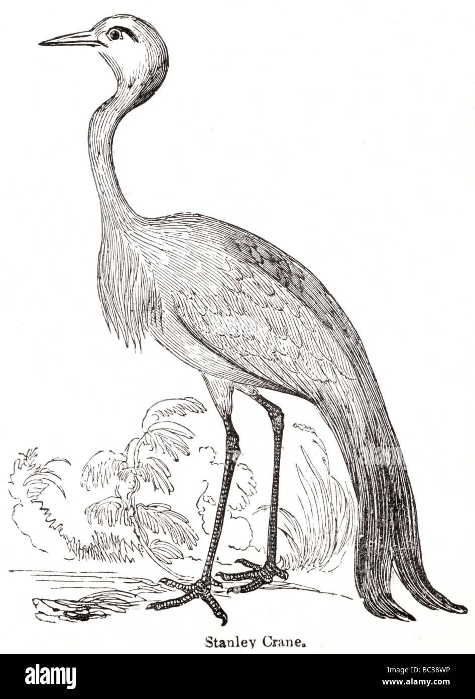 stanley crane - Stock Image