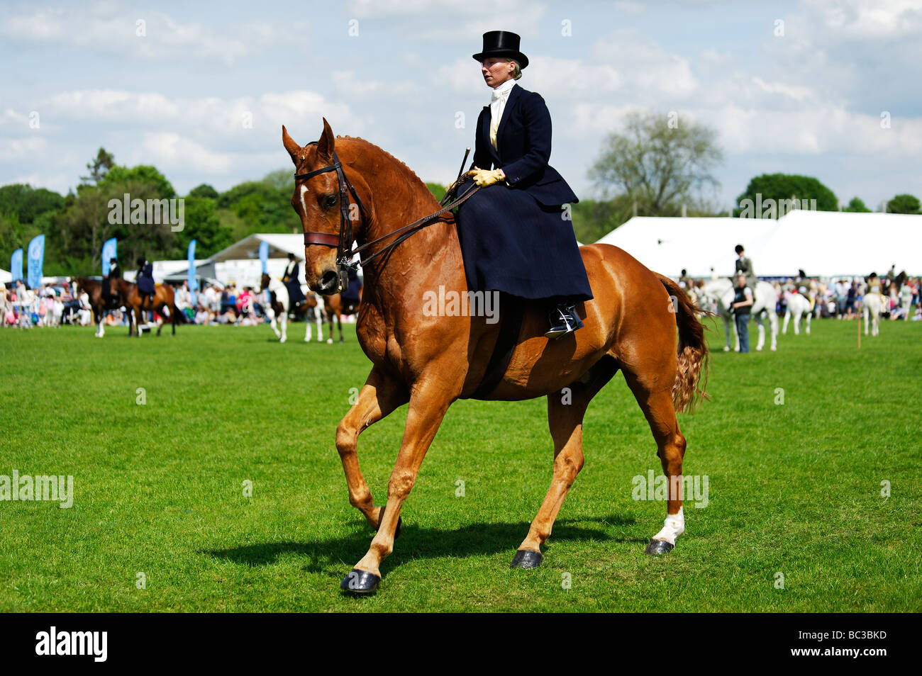 Elegant side saddle rider at an equestrian event during the Northumberland County Show at Corbridge  25 May 2009 - Stock Image