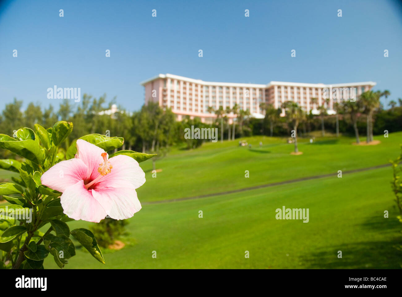 A hibiscus flower and the Fairmont Southampton Hotel Southampton Bermuda Southampton. - Stock Image
