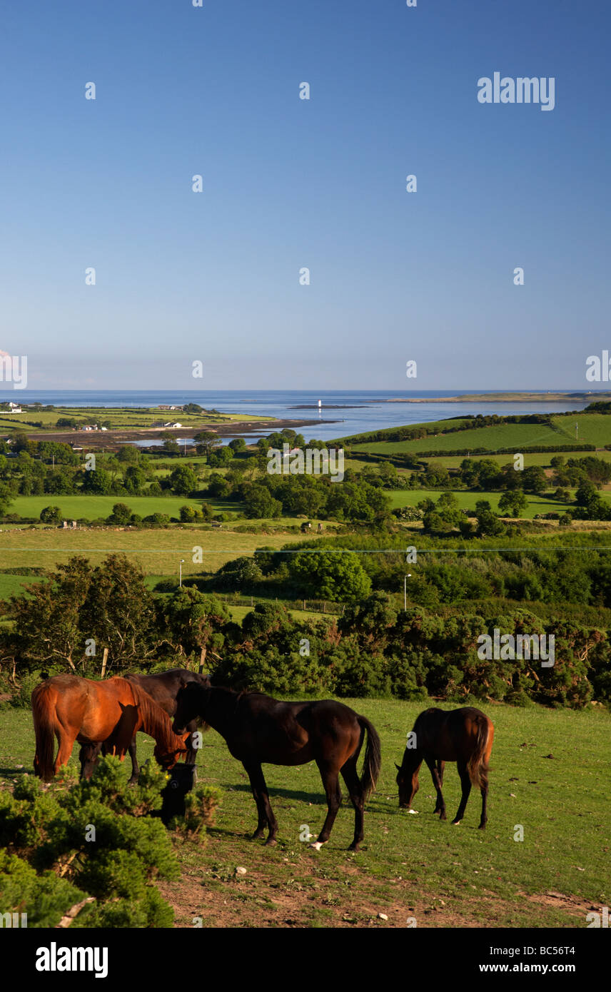 view over farmland and mouth of strangford lough county down northern ireland uk - Stock Image