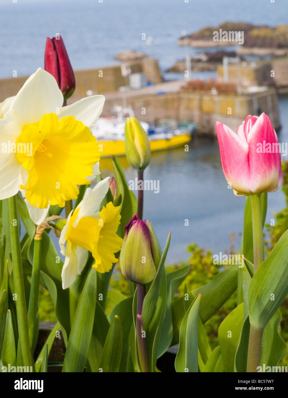 Pretty Spring Flowers Against The Backgrop Of The Harbour In The