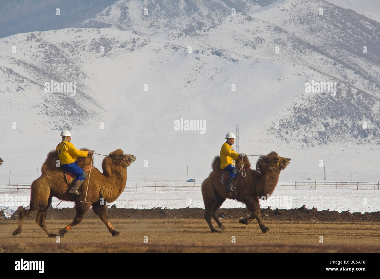Mongolian camel polo players - Stock Image