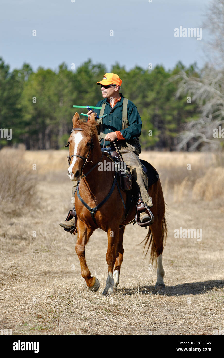 Dog Trainer George Hickoxon Horseback Using Radio Tracker to Locate Dog in the Piney Woods of Georgia Stock Photo