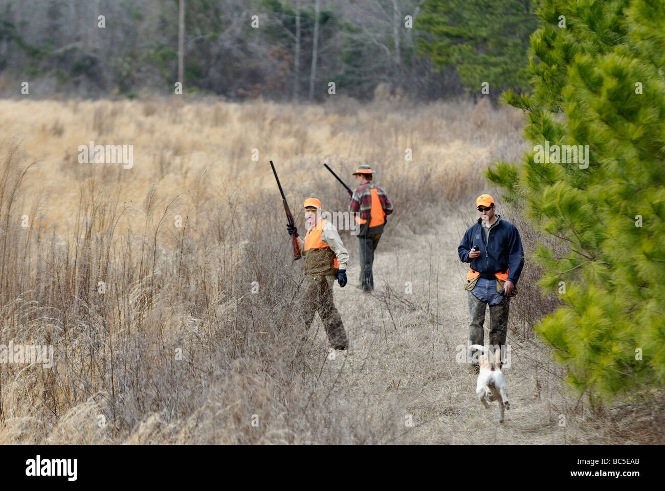 Upland Bird Hunters Guide and English Pointer in Field at Buckeye Plantation in the Piney Woods of Georgia - Stock Image