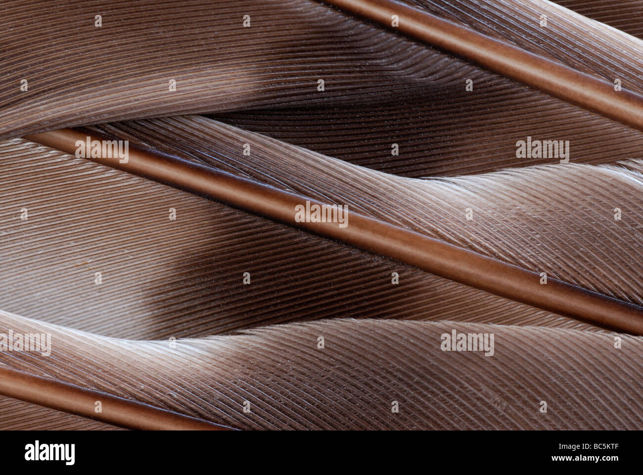 Close-up of the feathers of a wing. - Stock Image