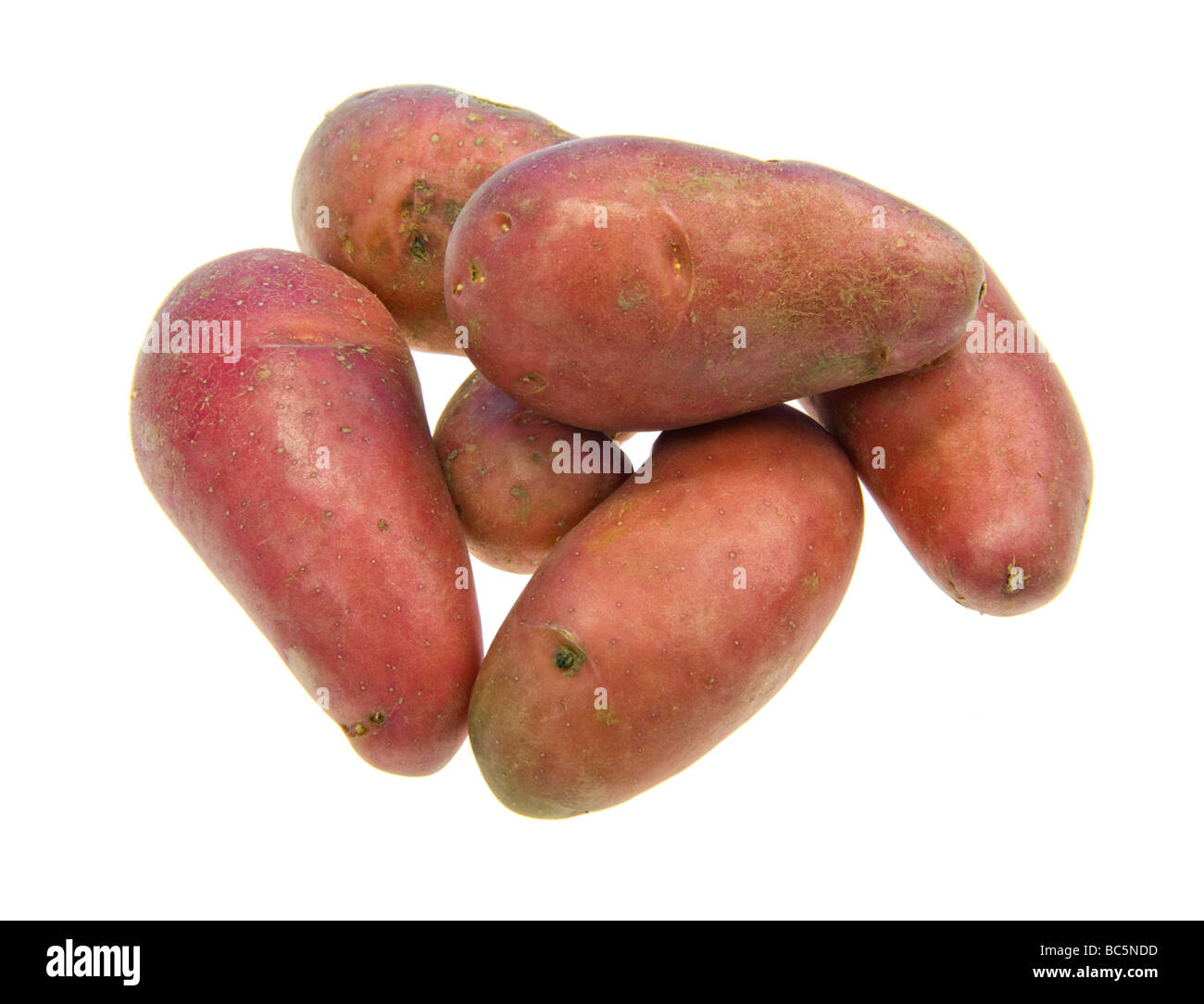 red potato french new sort of potatoes of france FOOD curious cultivation culturev cultivate grow grower color cut - Stock Image