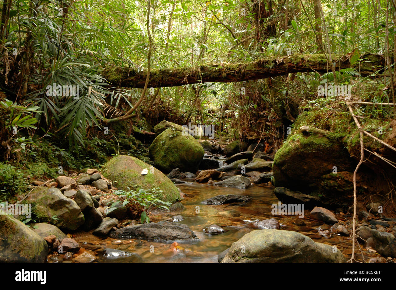 Forest Stream  in Mount Kinabalu national park on the island of Borneo in Malaysia - Stock Image