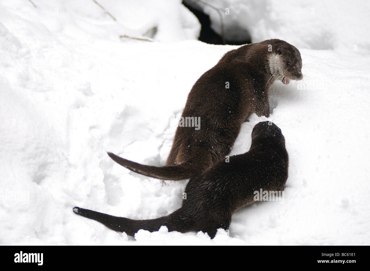 O Is For Otter Stock Photos & O Is For Otter Stock Images - Alamy