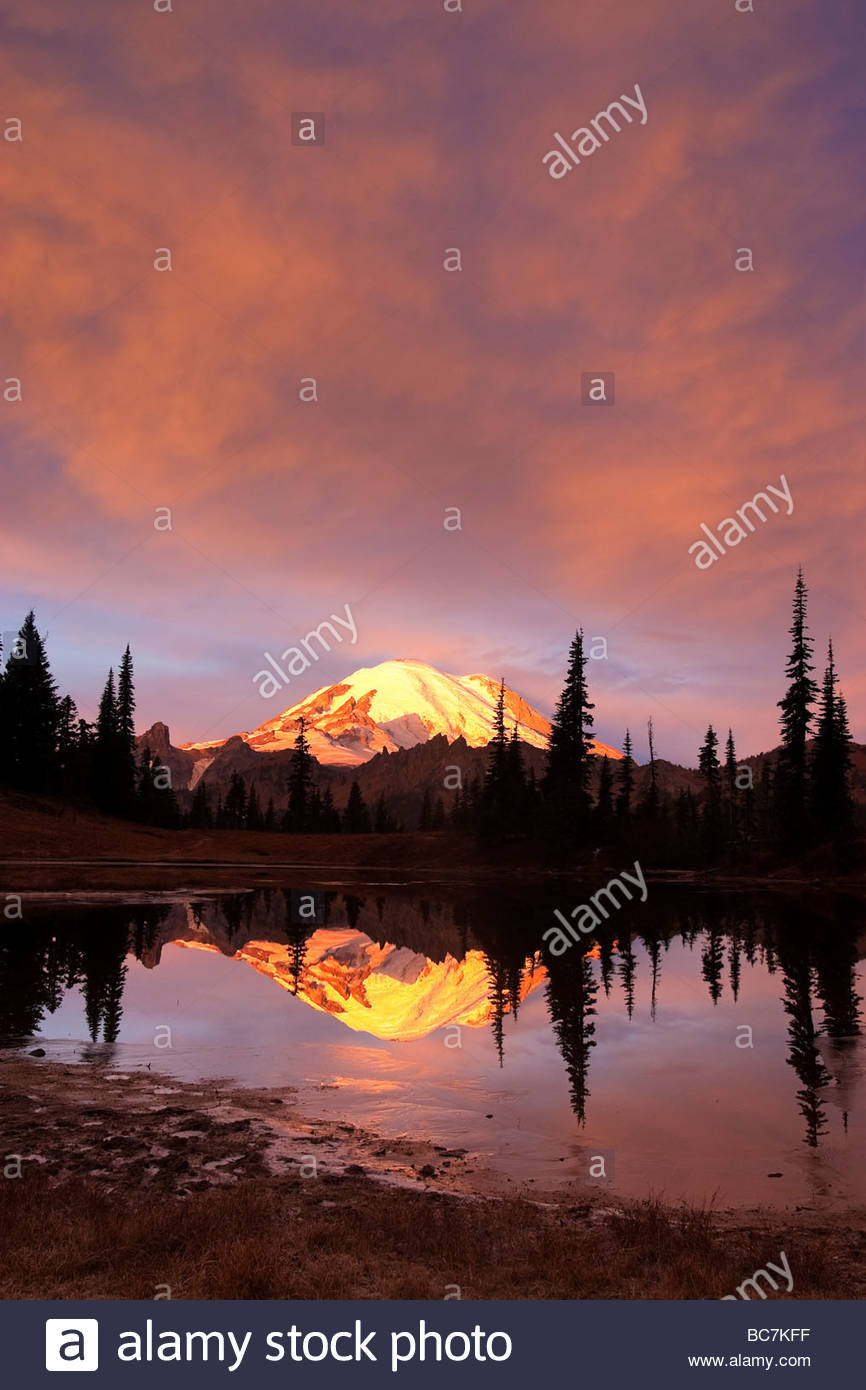 Mount Rainier, under a fiery sunrise, is reflected in Tipsoo Lake located near Chinook Pass, Washington. - Stock Image
