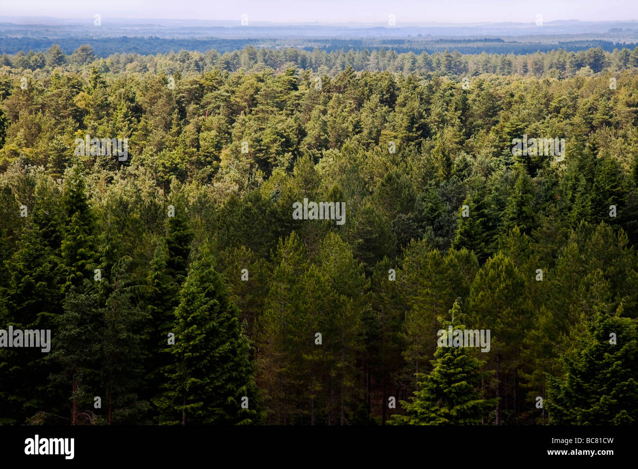 Forest of trees taken from viewpoint looking down onto. - Stock Image