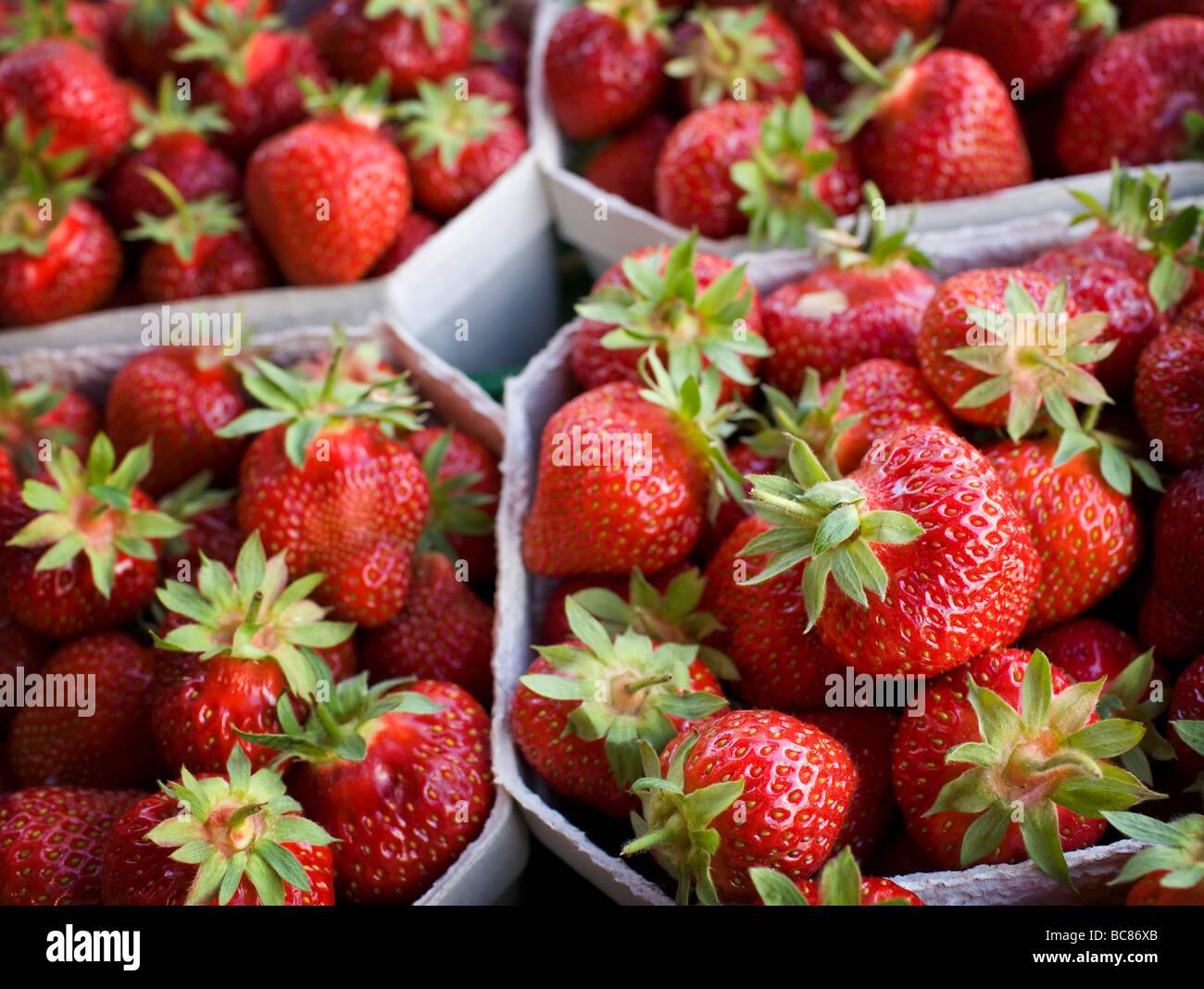 Strawberries - Stock Image