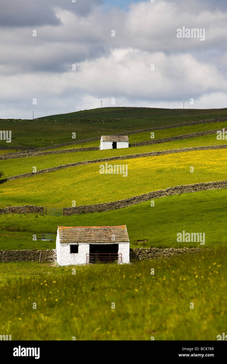 Field Barns and Meadow at Bowlees Teesdale England - Stock Image