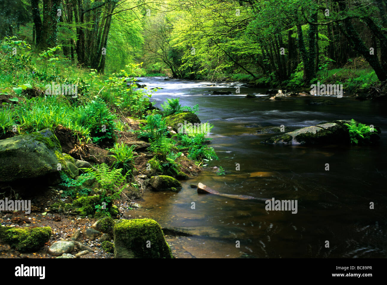 The River Tavy in Spring at Shilla Mill near Tavistock Devon Stock Photo
