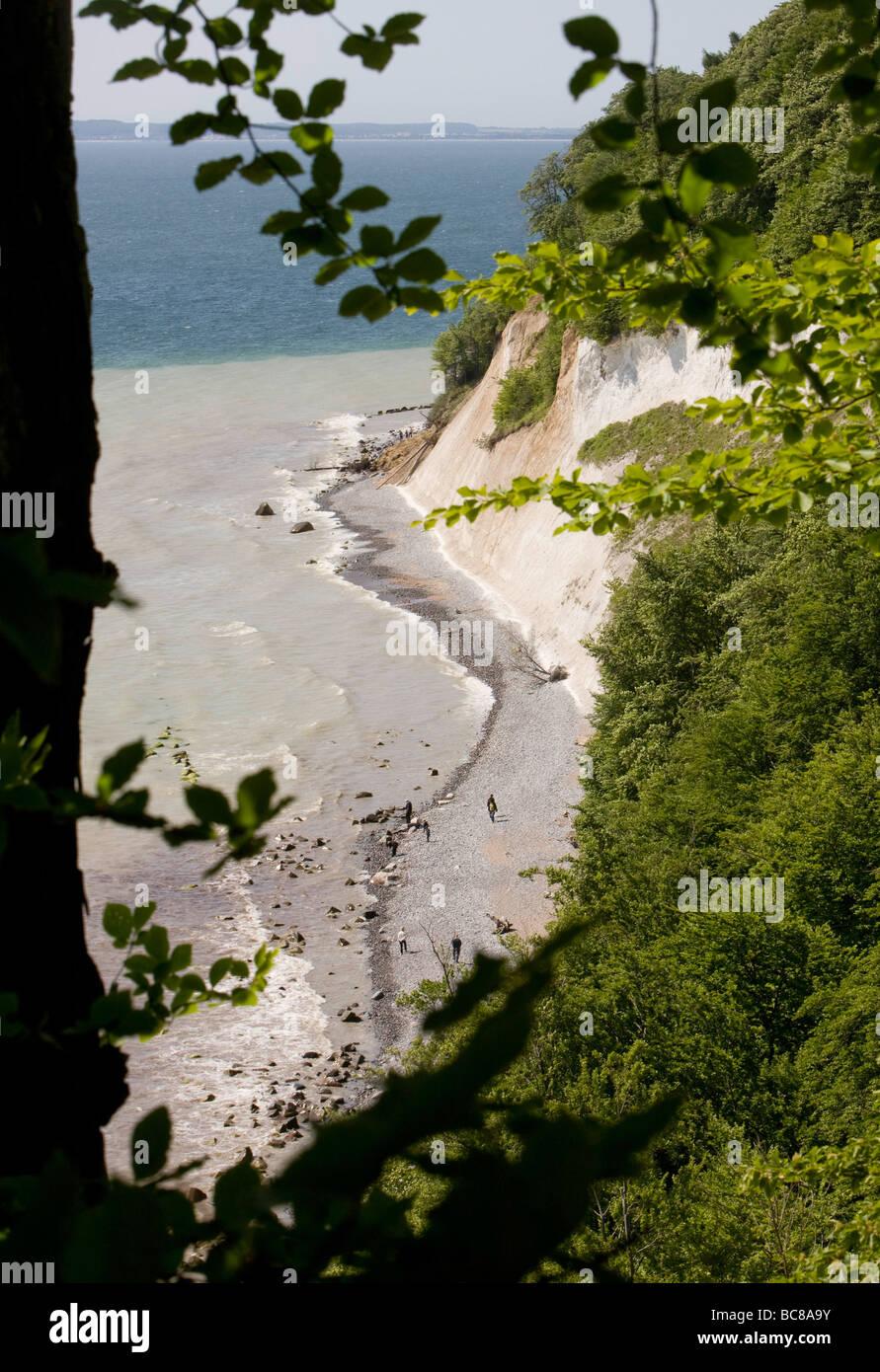 Kreidefelsen in der Naehe von Sassnitz auf der Insel Ruegen - Stock Image