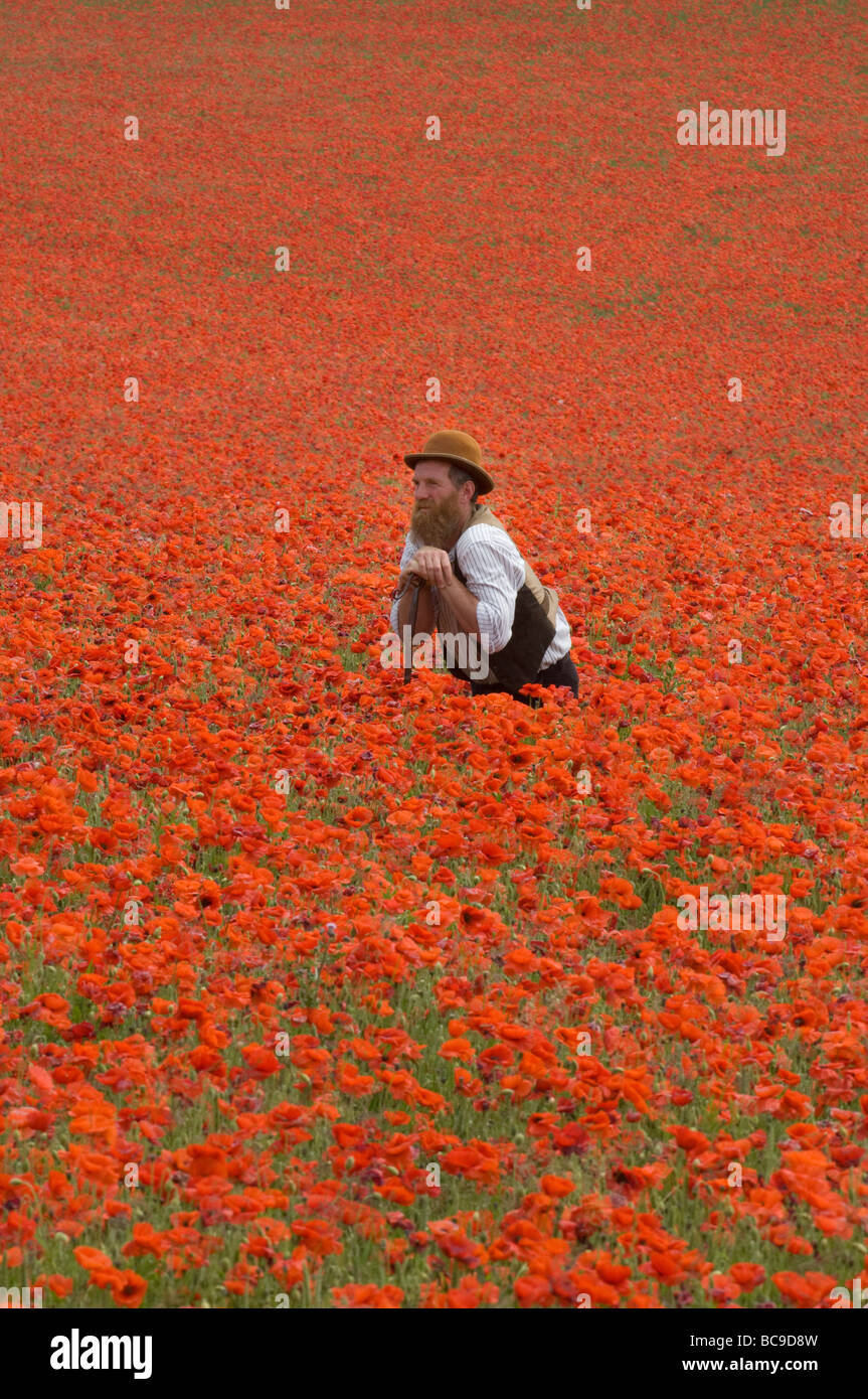 A  farmer in a field of poppies on the South Downs in Sussex England. The flowers are a blaze of scarlet on a hot - Stock Image