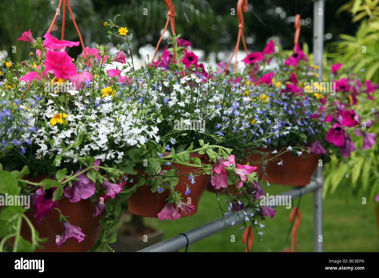 Hanging baskets at Bloom 2009 Ireland s top garden show - Stock Image