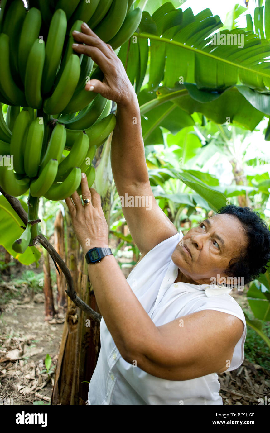 Fair trade banana farmer, Dominican Republic, near border with Haiti. - Stock Image