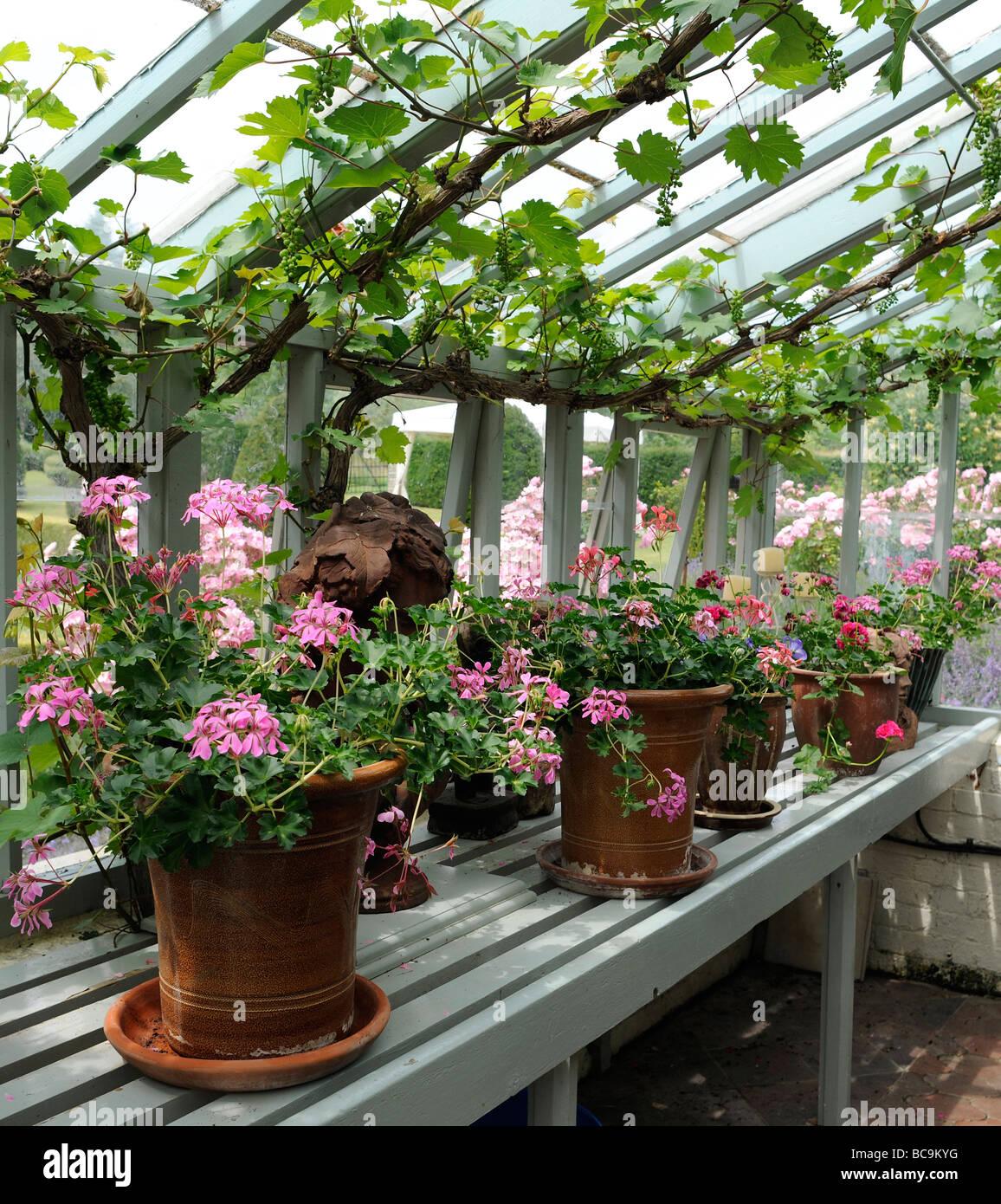 Greenhouse Plants Plant English Garden Vines