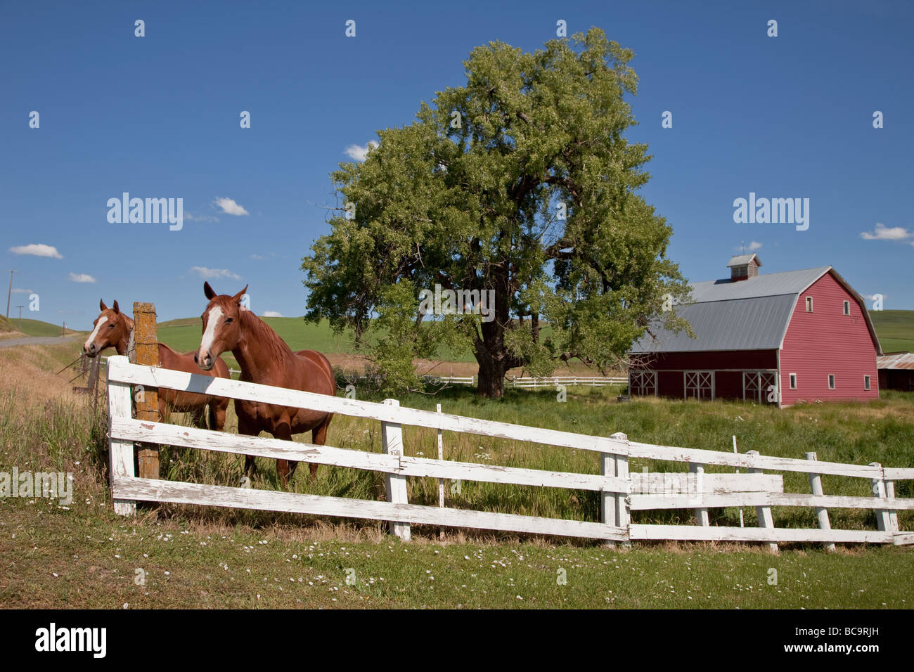 Near Pullman, Washington, in Palouse Country, Southeastern Washington State. Horses and Red Barn. Stock Photo